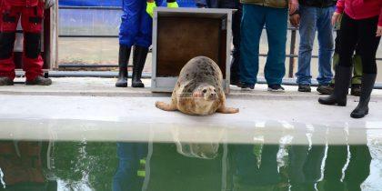 foci de mare